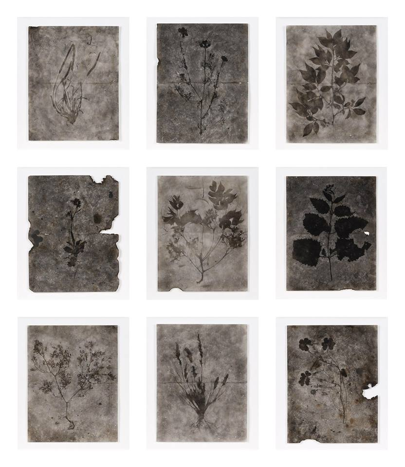 XVII - Señor Cifrián DIBUJOS DE HUMO # políptico (79•78•75•71•61•44•54•70•47). Humo sobre papel de algodón en caja vitrina de metacrilato. 106x91